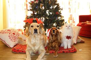 Weihnachtsgeschenke Forum.Geschenkt Geliebt Verstoßen Tiere Sind Keine Weihnachtsgeschenke